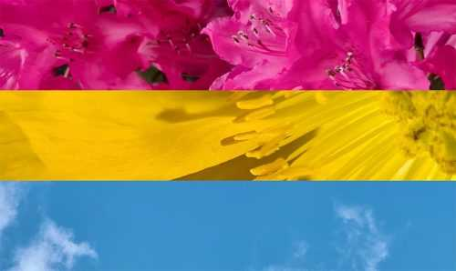 Pansexual Wallpaper