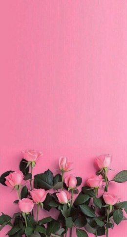 Pink Hintergrundbild