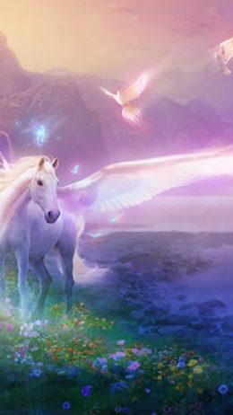 Unicorn Fond d'écran