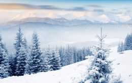 Winter Background Wallpaper